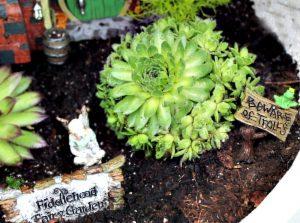 Succulents in a fairy garden. An outdoor fairy garden in a garden pot container.