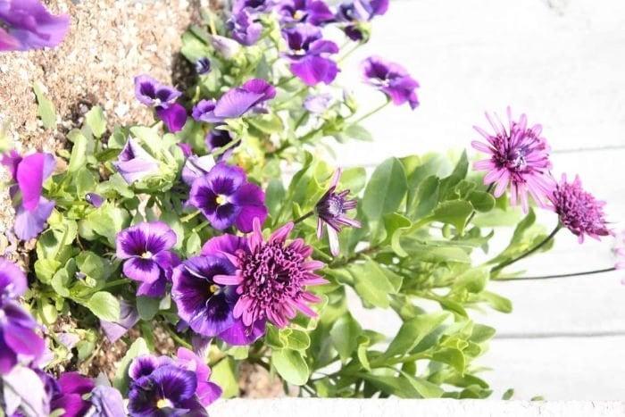 Pretty back yard flowers.